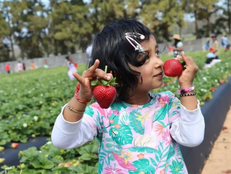 Klein Eikeboom - Strawberry picking